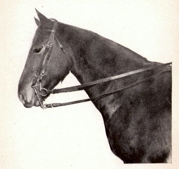 Regulation  US Cavalry Double Bridal, circa 1906